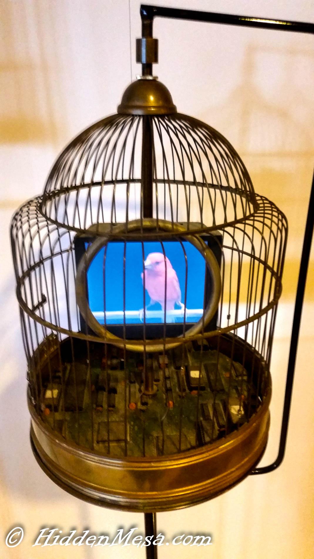 It Bird