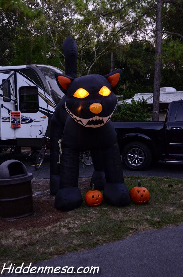 Large Black cat