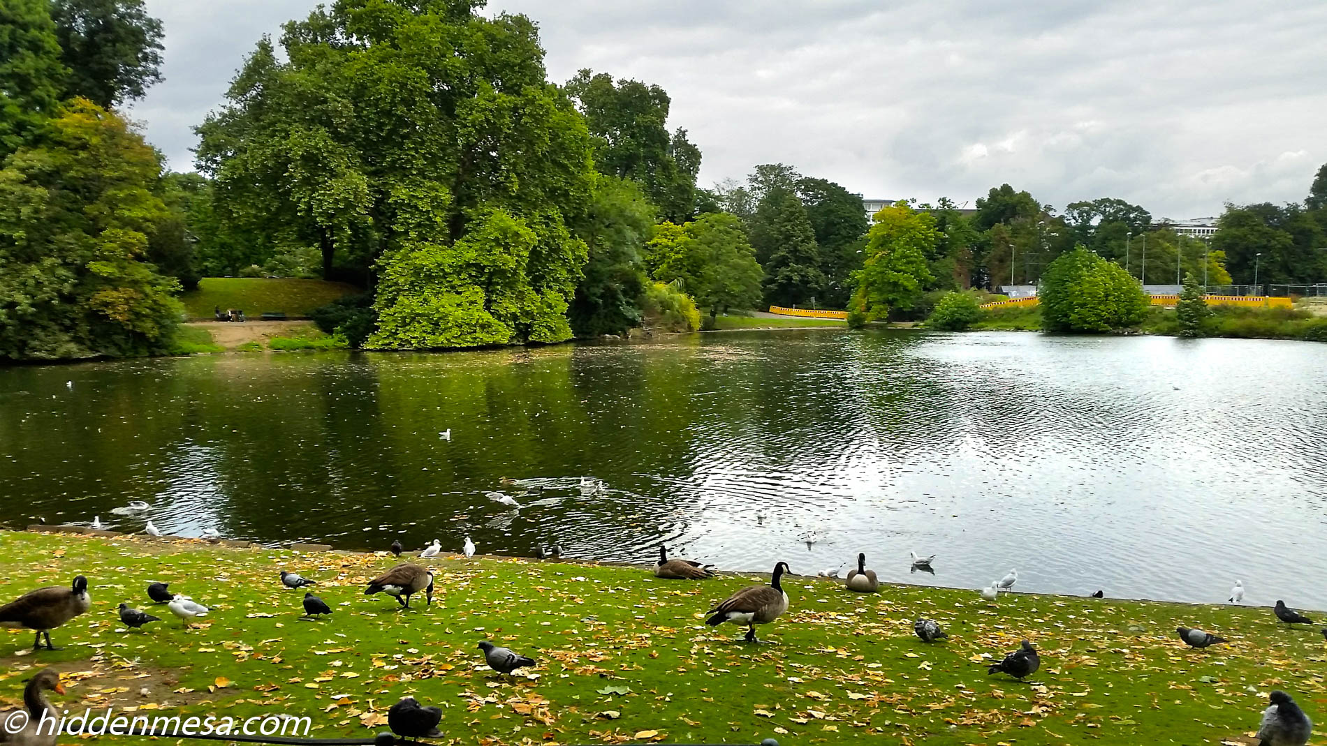 Geese in the Hofgarten