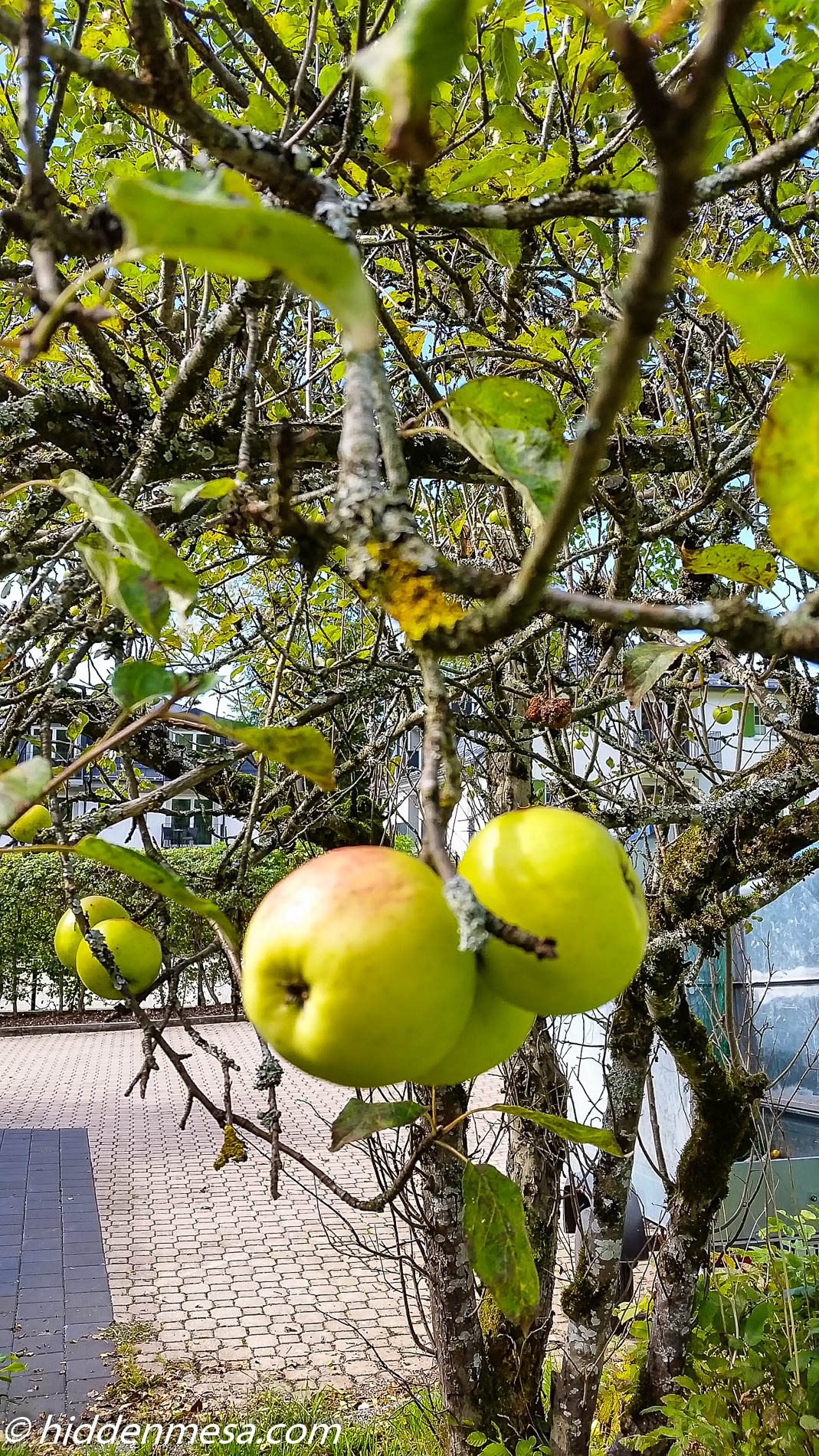 Apples in Schwangau