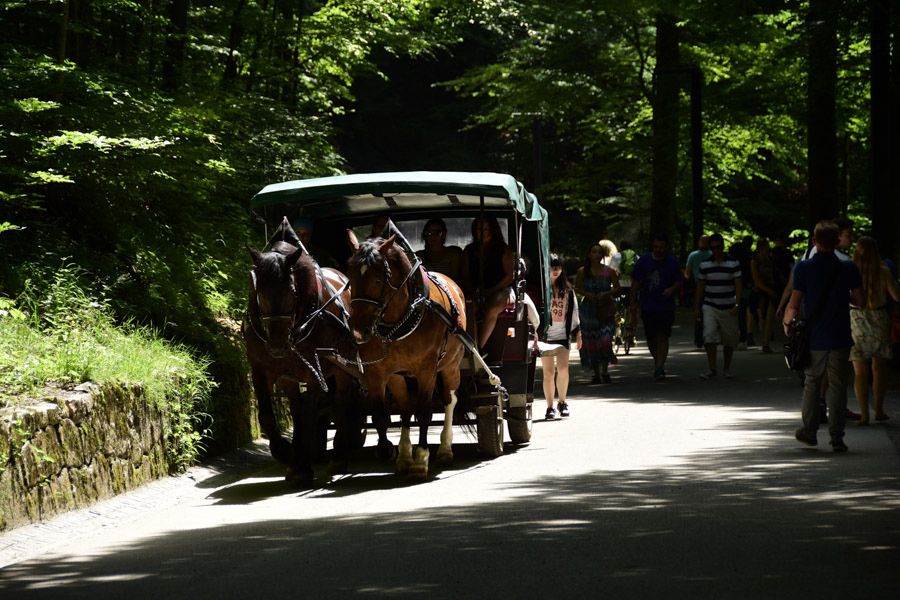 Horse drawn carriage at Neuschwanstein Castle