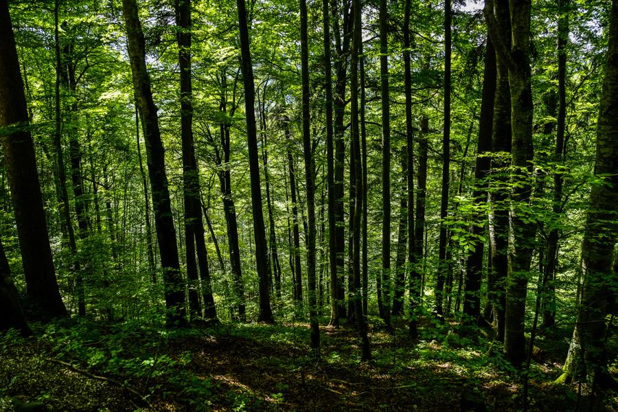 Forest near Neuschwanstein Castle