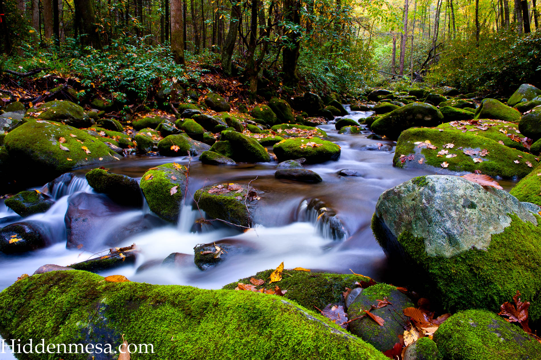 Slow Moving Stream in Fall