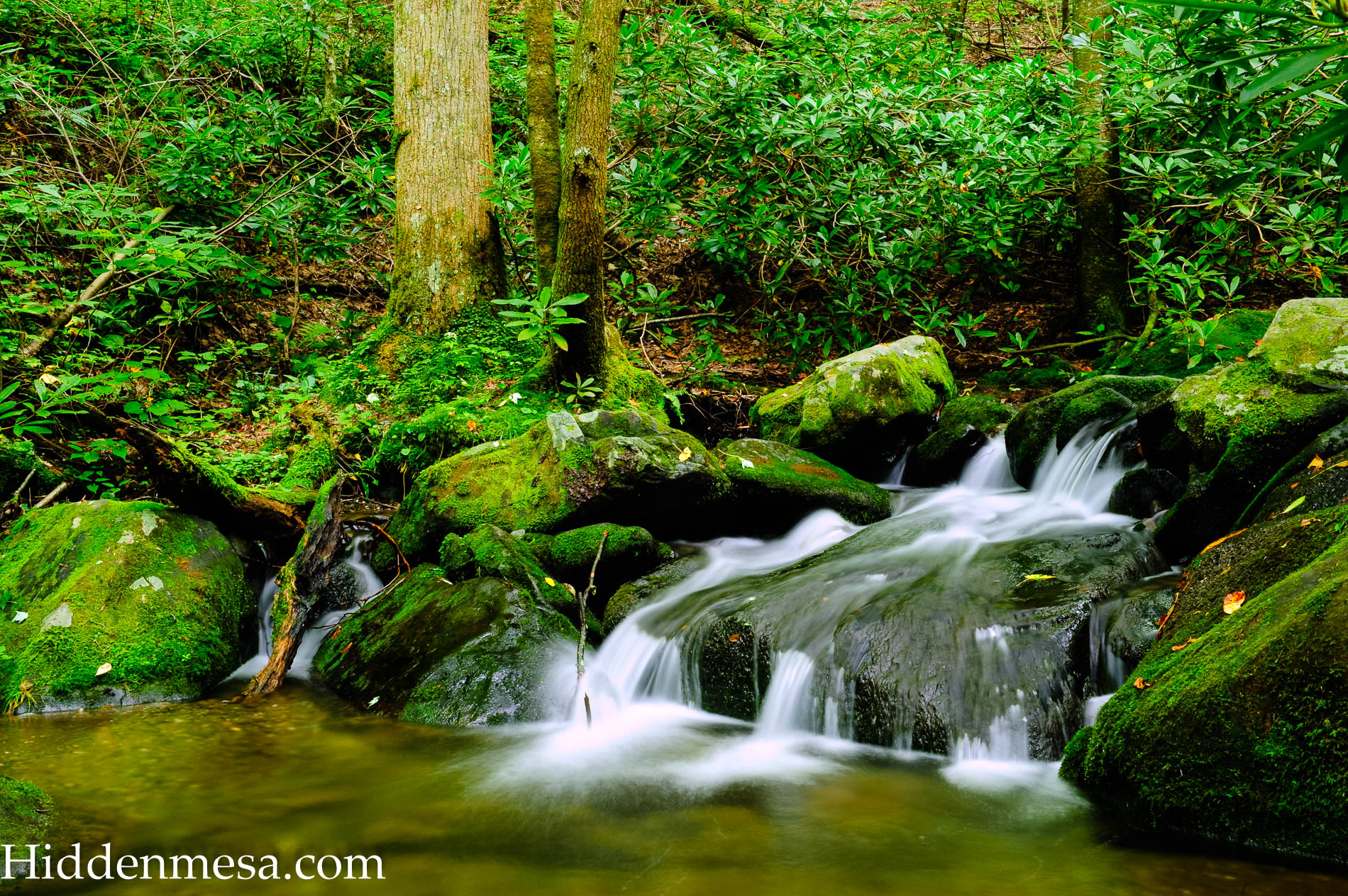 Water Fall Great, Smoky Mountains National Park