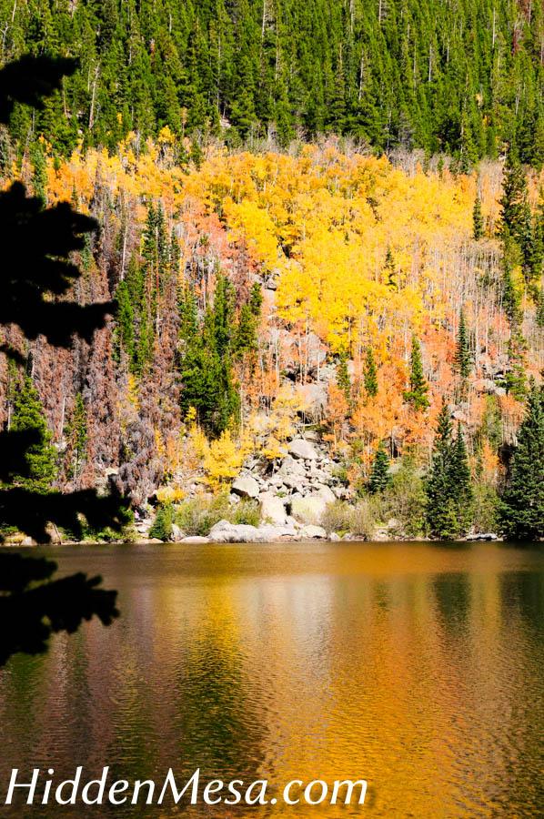 Aspens reflecting in lake