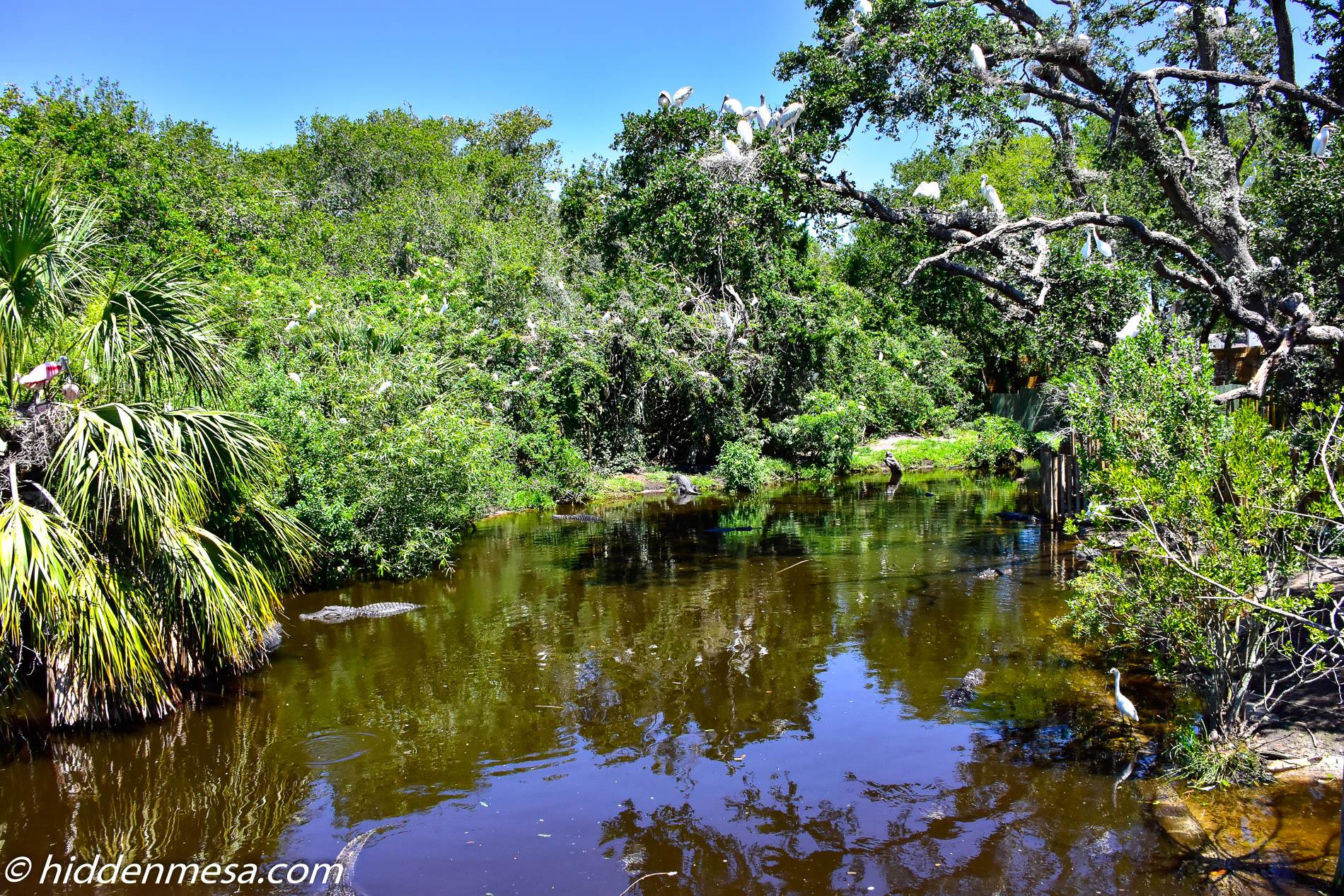 Alligator Lagoon and Wading Bird Rookery