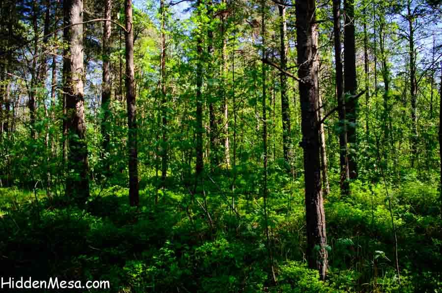 Countryside in Rural Estonia