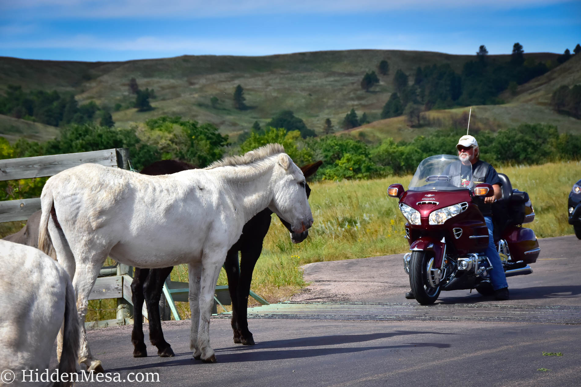 Burros and motorcycle