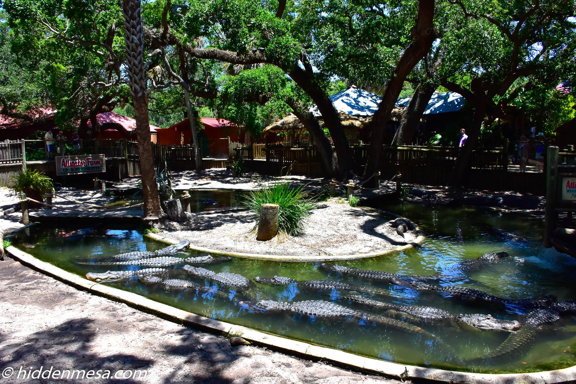 Alligator Lagoon